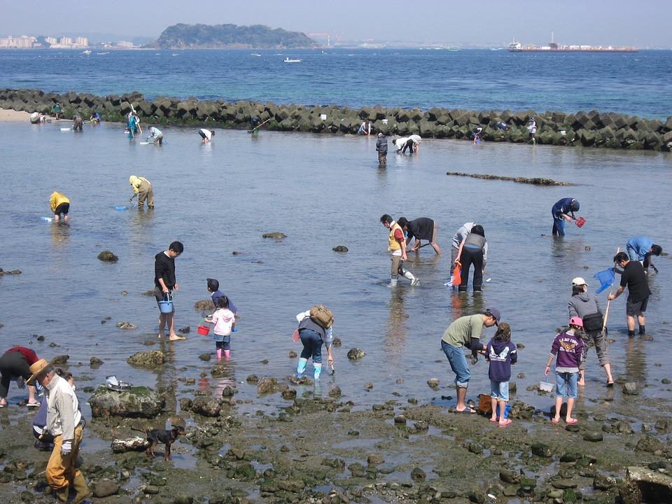 走水海岸, 潮干狩, 大潮, アサリ, 貝, 海, 岩場, 砂場, 日本人, 習慣, 伝統, 行事, 季節