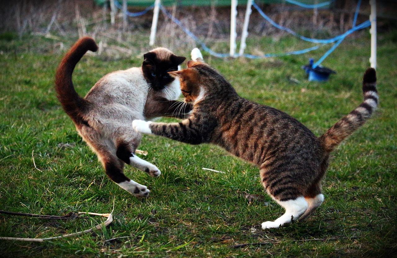 Картинки кошек играющих