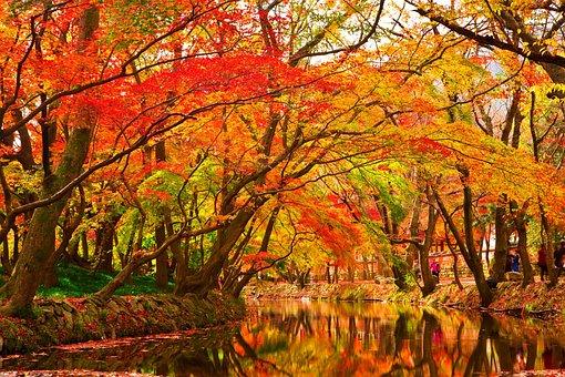 紅葉, 木, 秋, 葉, 赤いカエデの葉, 落ち葉, カエデ, 黄色の葉の葉