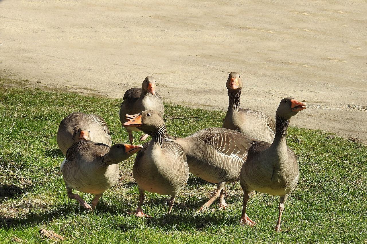 Naked Goose On Twitter