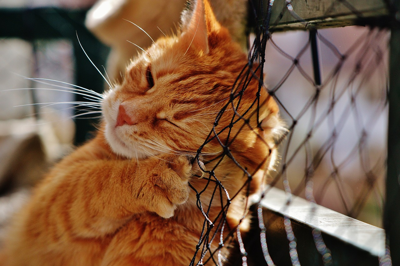 safe and effective flea treatment for kittens