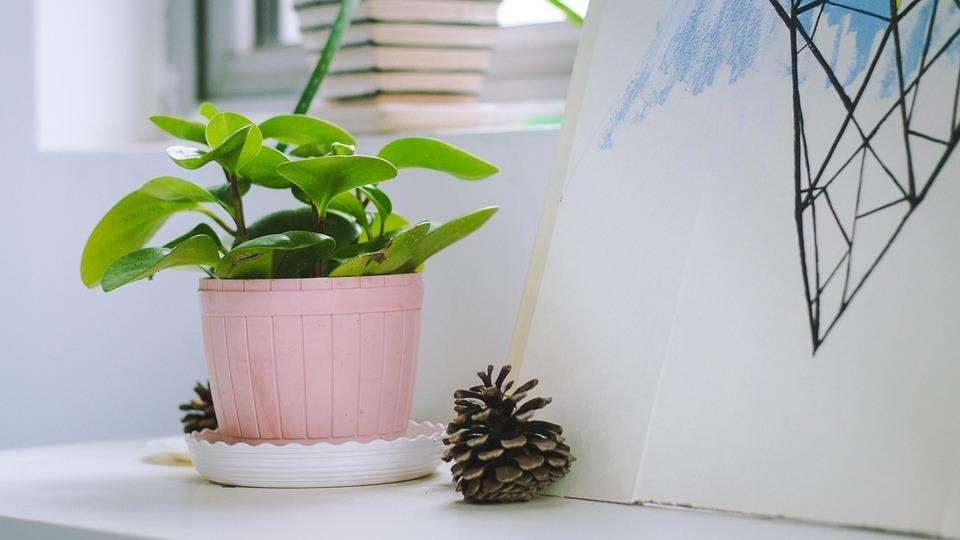 Free photo: Indoor, Potted Plants, Desktop - Free Image on Pixabay ...