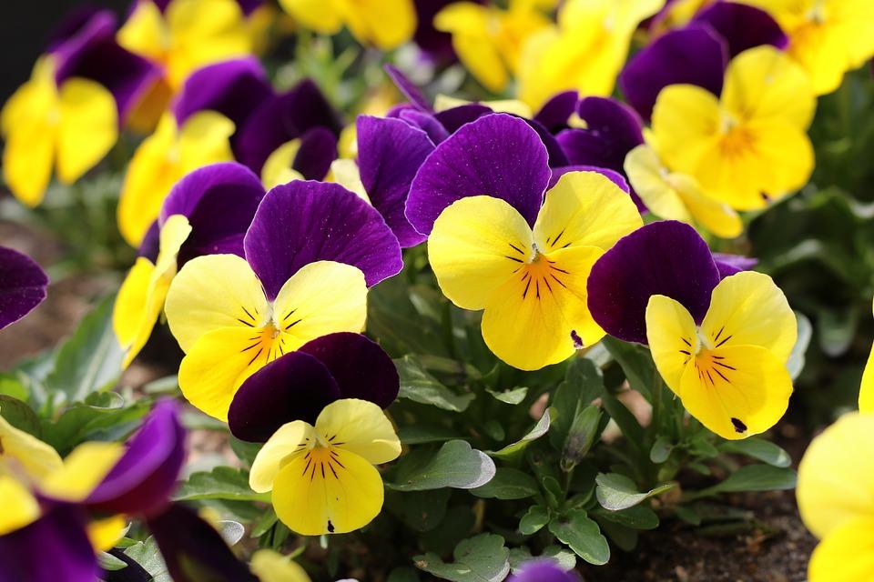 Wiosna Charakter Rośliny - Darmowe zdjęcie na Pixabay