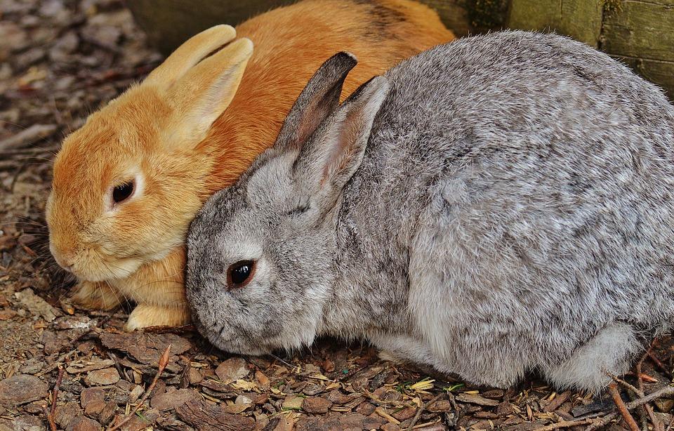 Kaninchen, Wildpark Poing, Hase, Häschen, Niedlich, Süß