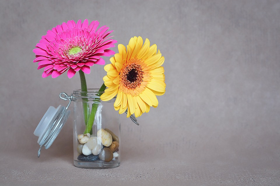 Gerbera Flowers Pink Free Photo On Pixabay