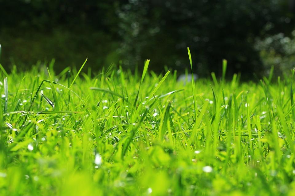 græsplæne forår