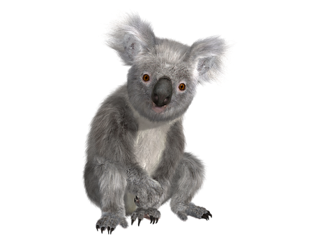 Koala Animal Nature Cuddly Australia Purry