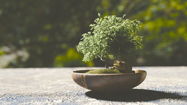 bonsai images pixabay download free pictures. Black Bedroom Furniture Sets. Home Design Ideas