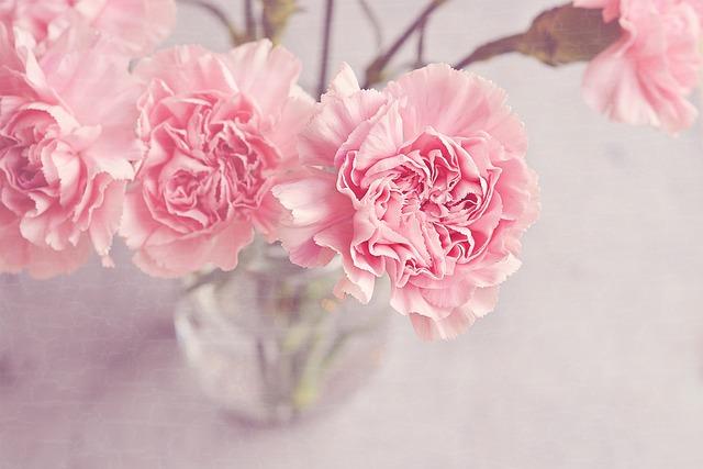 free photo flowers vase cloves pink tender free