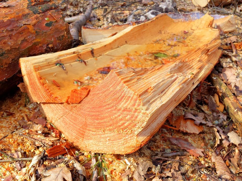 무료 사진: 트리, 나무, 숲, 냄새, 나무 껍질, 색, 물, 자연 - Pixabay ...