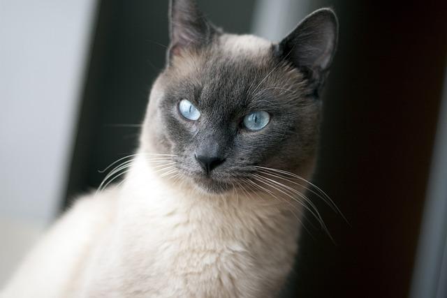 Female Cat Pet