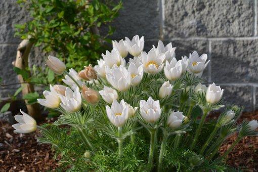 Resultado de imagen para flores delicadas