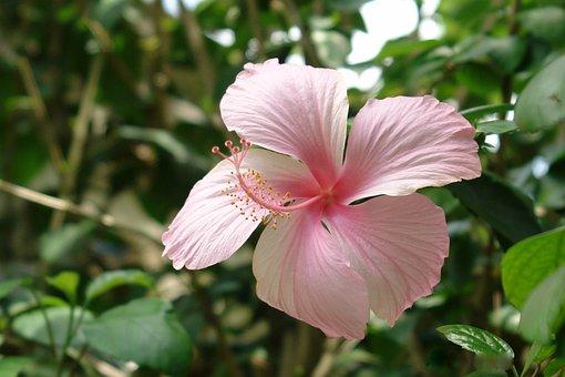 Afrikanische Blume Bilder · Pixabay · Kostenlose Bilder herunterladen