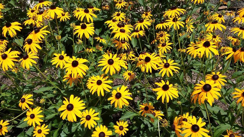 Flowers sunflowers yellow free photo on pixabay flowers sunflowers yellow summer sun nature mightylinksfo