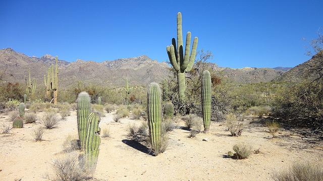 photo gratuite d233sert cactus arizona tucson image