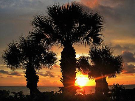 Sunset In Florida, Fan Palm, Atmospheric