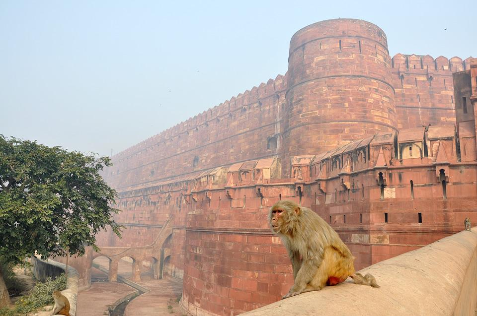 Monkey, Magot, Animals, The Red Fort, Building