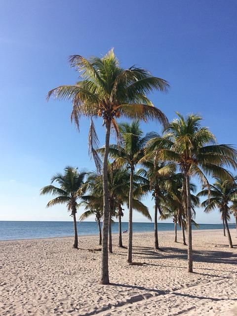 photo gratuite plage palmiers mer vacances image. Black Bedroom Furniture Sets. Home Design Ideas