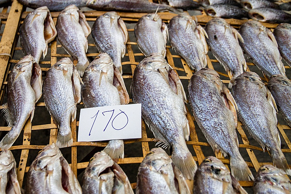 Salted fish horse dried free photo on pixabay for Dried salted fish
