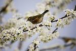 kwiat, white, ptak