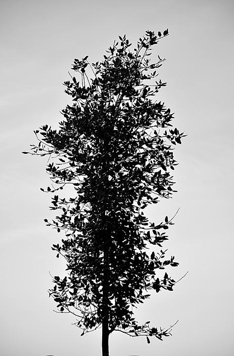 Free photo: Tree, Leaves, Nature, Vertical - Free Image on Pixabay ...