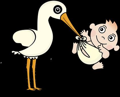 stork images pixabay download free pictures