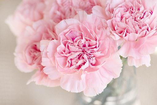 Pink flowers images pixabay download free pictures flowers pink cloves cut flowers close up f mightylinksfo