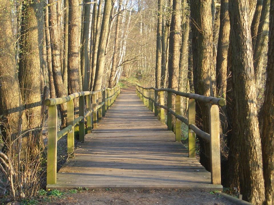 Kostenloses Foto: Holzbrücke, Steg, Wald, Baumstämme ...