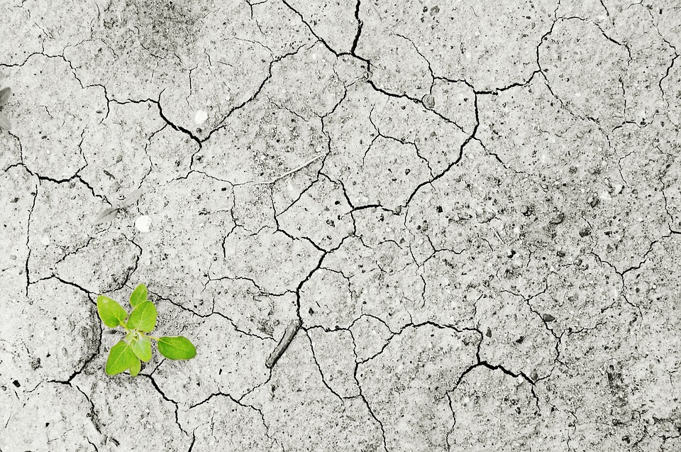 Climate Change, Climate, Drought, Dry Period