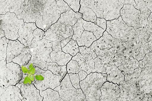 気候変動, 気候, 干ばつ, 乾燥期, 水の不足, 水, いいえ, 植物, 緑