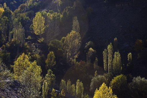 Baum, Schatten, Wald, Dunklen Wald