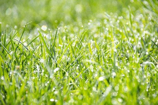 Grass, Green, The Freshness, Wallpaper