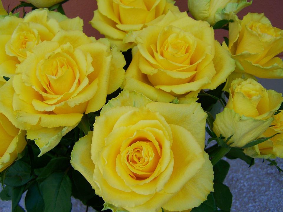 Afskårne Roser rose bouquet gule roser afskårne - gratis foto på pixabay