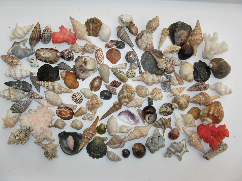 Mussels, Marine Gastropods, Meeresbewohner, Sea Animals