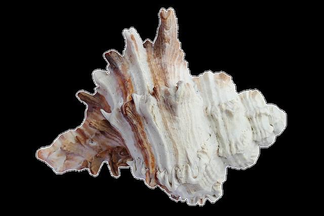 Sea Shells Ocean 183 Free Photo On Pixabay