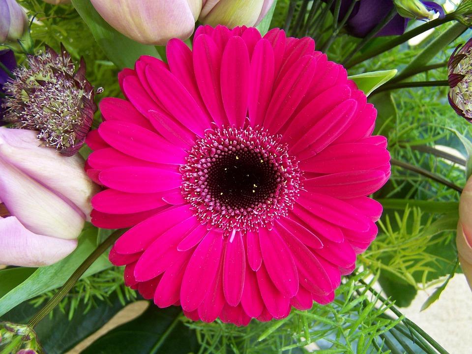 flower bouquet gerbera cut free photo on pixabay