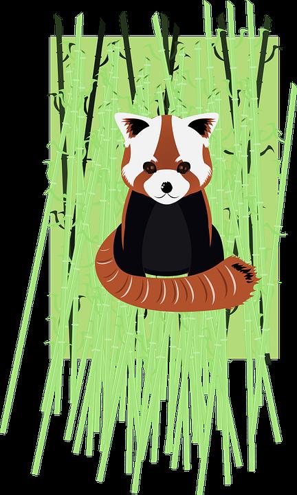 Roter Panda Bambus Vektor Kostenlose Vektorgrafik Auf Pixabay