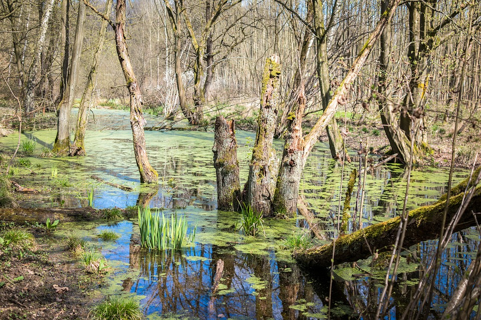 swamp marsh wetland 183 free photo on pixabay
