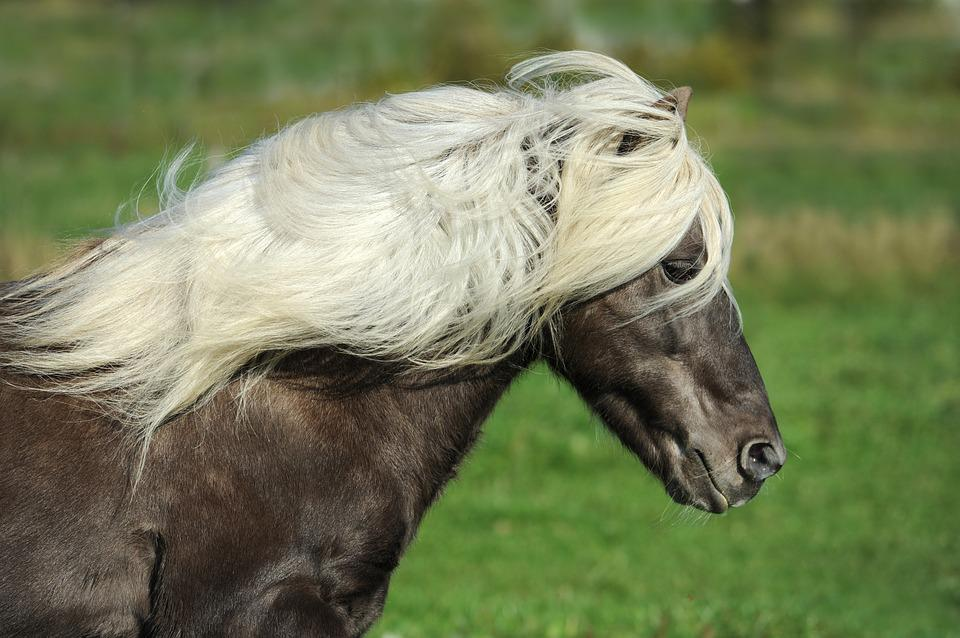pony images pixabay download free pictures