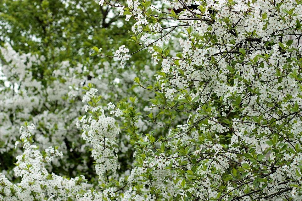 Blumen Weiß Casey · Kostenloses Foto auf Pixabay