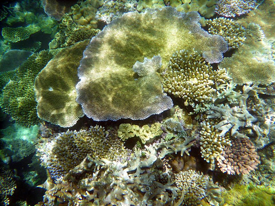 Australia, De Coral, Buceo, Mundo Submarino