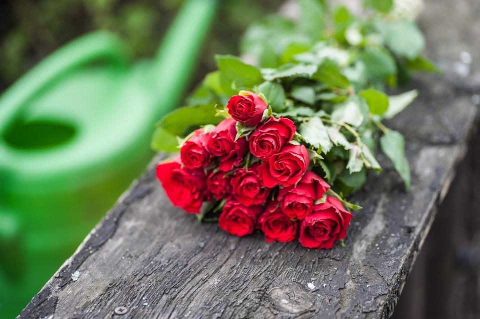 kostenloses foto rosenstrauss liegend rot holz. Black Bedroom Furniture Sets. Home Design Ideas