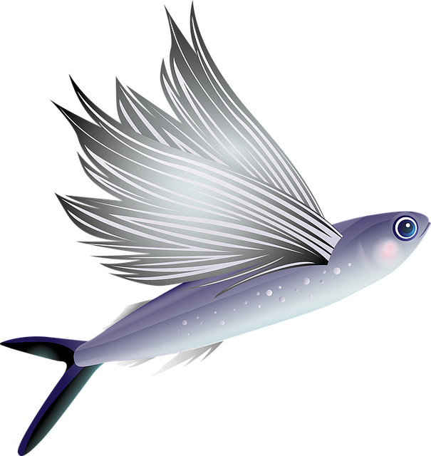 Flying fish aquarium tropical free vector graphic on pixabay for Flying fish images