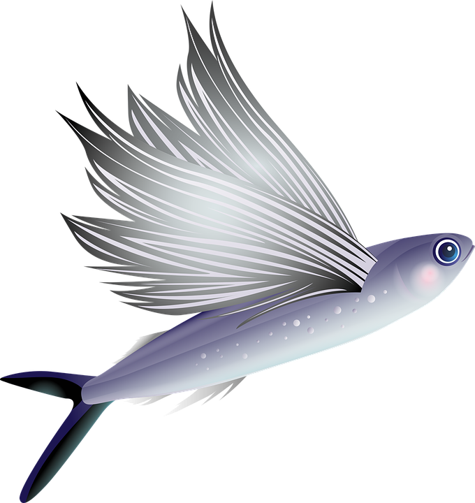 flying fish cartoon - photo #27