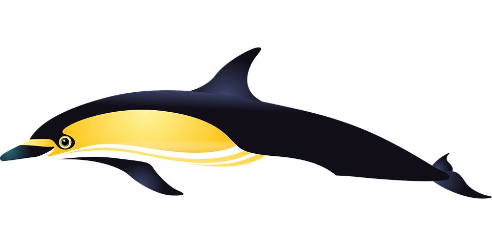 Dolphin Sea Fish · Free vector graphic on Pixabay