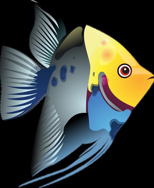 tropical fish sea exotic free vector graphic on pixabay rh pixabay com cute tropical fish clipart colorful tropical fish clipart
