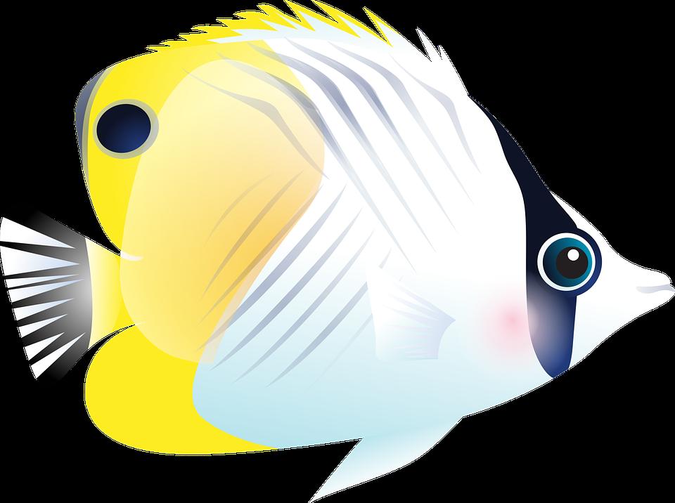 Image vectorielle gratuite poisson poissons tropicaux for Poisson tropicaux