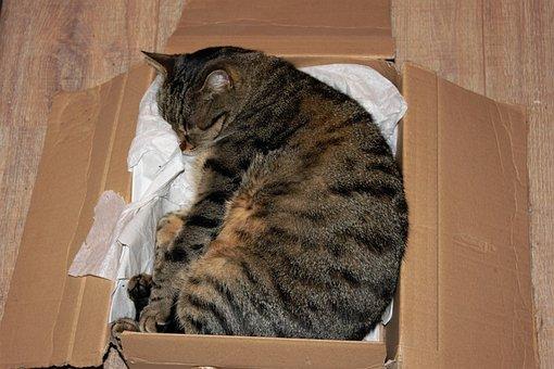 Kucing, Karton, Kucing Domestik, Kotak