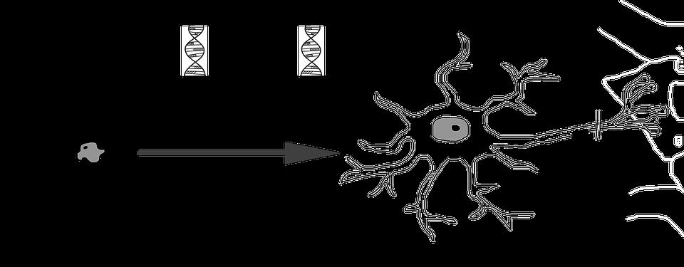 Neuronale Differenzierung · Kostenloses Bild auf Pixabay