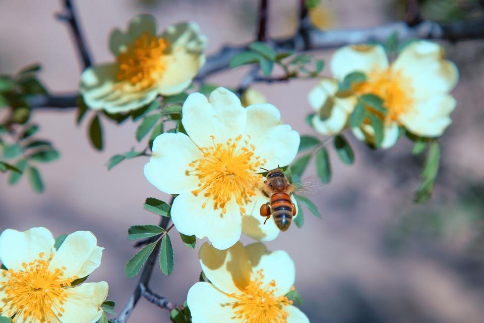 Ape impollinazione polline · foto gratis su pixabay